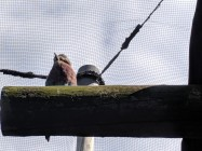 More Exotic Birds
