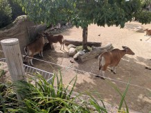 Cool Cows (!?)