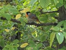 Tropical Birds 4