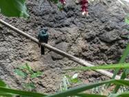 Tropical Birds 3
