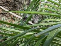 Tropical Birds 2