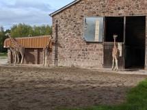 The Giraffe Enclosure