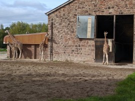 The Giraffe Enclosure