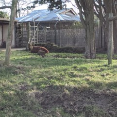 A Distant Tapir