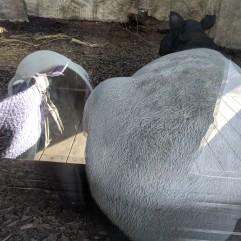 A Tapir's Bum